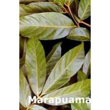 Marapuama  Erva ( 100g)